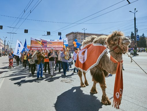 Chelyabinsk May Day for the first time in 7 years will be held without a camel Grigoriy and power engineers